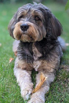 Schulhund Bruno
