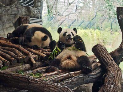 Die 123a hat sich Tiere im Zoo angesehen